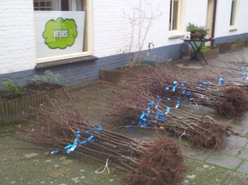 De bomen zijn opgehaald en afgeleverd bij Nicolette thuis