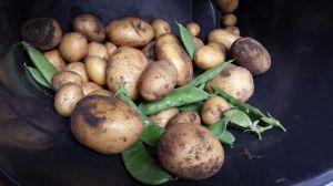 Aardappels, groenten, druiven