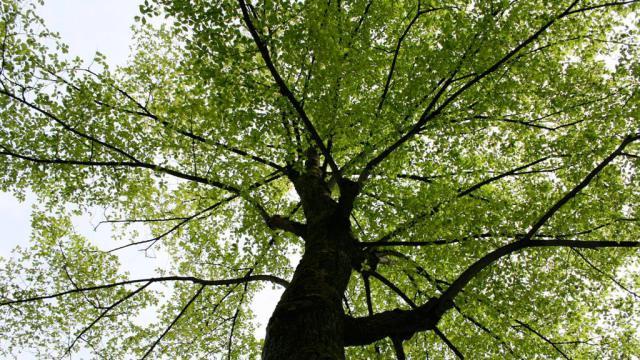 De koelte onder de boom is een ieder wel bekent