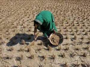 Bodemuitputting door klimaatverandering veroorzaakt hongersnood en noopt grote groepen mensen tot migratie